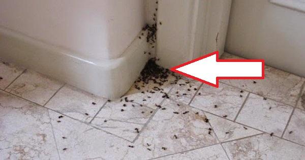 Dites non aux fourmis liminez les pour toujours 5 solutions miracles et 100 naturelles juste - Bicarbonate de soude fourmis ...