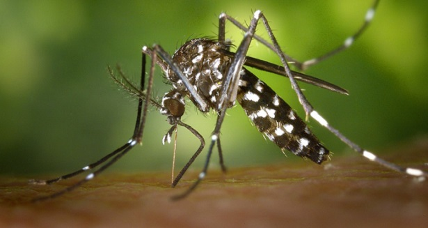 Pourquoi les moustiques ne s'attaquent qu'à vous ? La faute à votre groupe sanguin. Voici pourquoi !