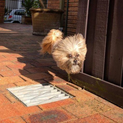 Chaud devant ! Le chien volant est arrivé…